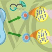 تشخیص ناهنجاریهای کروموزومی با سونوگرافی/میلاد غرب